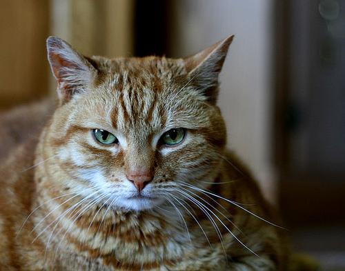 猫と自己肯定感の上げ方 ~アニマルセラピーの不思議~