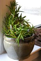カウンセリングルームの植物