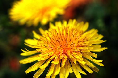 花粉症と嫌いの秘密